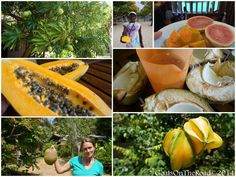 Living In Grenada: Our Life in Photos - Goats On The Road Fruit And Veg, Fresh Fruit, Southern Caribbean Islands, Driftwood Beach, Picture Sharing, Pet Sitting, Tropical Fruits, Most Beautiful Beaches, Grenada