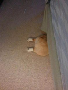 15 Dogs That Fail at Hiding - Corgi butt! Cute Puppies, Cute Dogs, Dogs And Puppies, Baby Animals, Funny Animals, Cute Animals, Corgi Dog, Dog Cat, Dog Fails