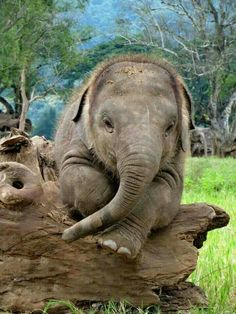 An elephant in deep thought
