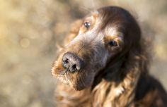 How To Keep Your Older Dog Happy and Healthy