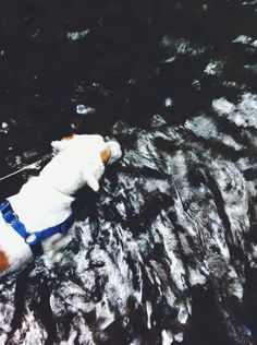 Graphic designer based in Athens - Greece. Sea, swim, surf lover and 365 days swimmer. August is a state of mind Vsco Grid, Athens Greece, Bald Eagle, Surfing, Vsco Cam, River, Dogs, Animals, Black