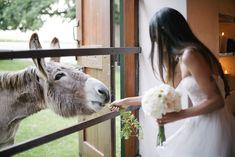 Photographer Portfolio, Celebrity Weddings, Dna, Summer Wedding, South Africa, Wedding Venues, Wedding Reception Venues, Wedding Places, Wedding Locations