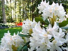 Richard Clayderman - Flowers Flowers Flowers - YouTube