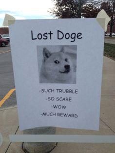 Lost Doge Meme Dumb And Dumber Humour Geek Stuff Things