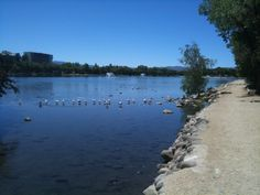 Reno NV's Virginia Lake Park, 1/3 mile wide, 1/2 mile long, attracts ducks and geese