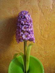 Гиацинт,hyacinth,hyacint,jacinthe,Hyazinthe ,giacinto,jacinto - Мастер-классы по украшению тортов Cake Decorating Tutorials (How To's) Tortas Paso a Paso
