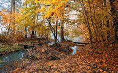 الخريف ورق الجدران، والأشجار والأوراق والفضاء، والخريف، والصور، والصور، والطبيعة