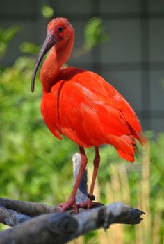 Quotes for the scarlet ibis