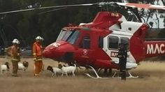 #goatvet likes this story - goat buts rescue helicopter - it probably just wanted a ride
