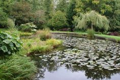 Soos Creek Botanical Garden in Auburn, WA