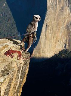 Maverick Meerkats #climbing