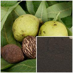 black walnut hulls powder Wild Crafted soap by TraverseBaySoapCo