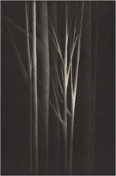 """iamjapanese: yama-bato: Robert Kipniss """"Forest Nocturne IV"""" Mezzotint 19 3/8 """"x 14"""" 2001 More and More"""