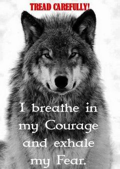Is it just me or does this wolf& expression look amused about something? Wolf Qoutes, Lone Wolf Quotes, Lion Quotes, Wisdom Quotes, True Quotes, Motivational Quotes, Inspirational Quotes, Wolf Spirit Animal, Wolf Pictures