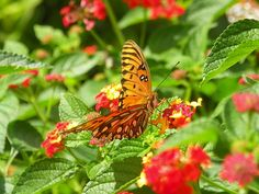 Butterfly and flowers by Lisa Wooten photography