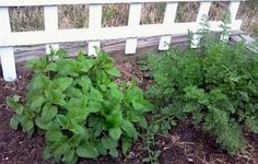 Here is a partial list of common herbs and flowers and their beneficial properties for the chickens