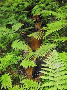 Kapradí an Čeřínku Plant Leaves, Plants, Plant, Planets