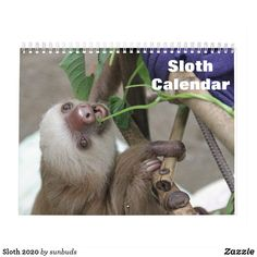 Shop Sloth 2020 calendar created by sunbuds. Cute Sloth, Where The Heart Is, White Elephant Gifts, Gifts For Family, Cute Animals, Sloth Animal, Gender, Age