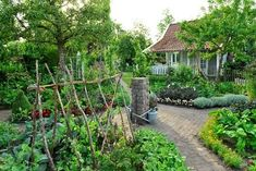 Claus Dalby calls this a romantic vegetable garden. Rustic supports for vining c… Claus Dalby calls this a romantic vegetable garden. Rustic supports for vining c…,floralia Claus Dalby calls this a romantic vegetable garden. Raised Vegetable Gardens, Vegetable Garden For Beginners, Gardening For Beginners, Vegetable Gardening, Gardening Blogs, Veggie Gardens, Gardening Zones, Urban Gardening, Gardening Supplies
