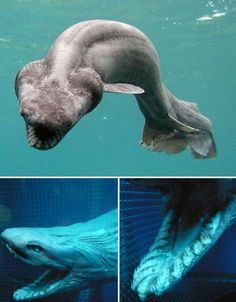 "Creepy Deep Sea Creatures (39 pictures) | memolition ** this reminds me of that prehistoric fish from the movie ""Dinosaur"" that ate the egg & spit it out (in the beginning).."