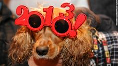 A dog wearing 2013 glasses poses as he celebrates the beginning of New Year's Day in Puerta del Sol in Madrid on December 31, 2012.