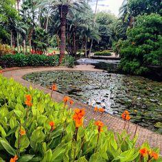 Brisbane Botanic Gardens and its animals #Brisbane #Queensland #australia #garden #gardens #botanicgarden #botanical #botanicalgarden #plants #trees #flora #fauna #lake #birds #trees #photography #filter #walk #city #explore @visitbrisbane @discoverqueensland @botanicsmelbourne