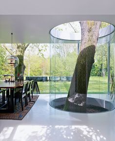 tree growing through house protected