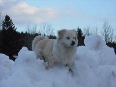 dashing trough the snow.......