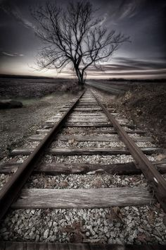 ~~Fall up the tracks | a tree, some tracks and a late fall dawn | by Todd Wall~~