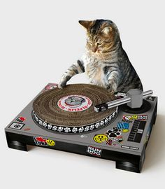 {Cat DJ Scratching Deck} train your kitty to spin records! ;)