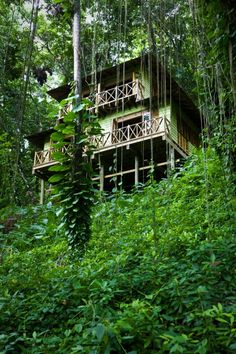 Kanopi House (Blue Lagoon, Portland, Jamaica) :: A tropical jungle of vine-drenched, 100-foot Banyan trees; soaring chartreuse bamboo and flowering magenta ginger lily descending into a secluded, white sand cove.