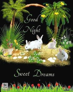 Beautiful Good Night Images, Love Heart Images, Durga Images, Good Night Quotes, Sweet Dreams, Birds, Wallpaper, Wallpapers, Bird