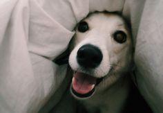 #puppy