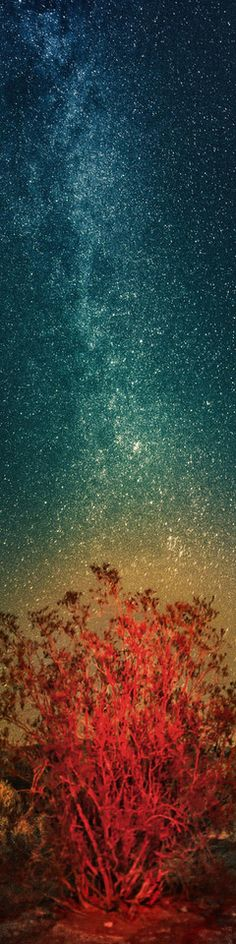 """☆ Death Valley - Burning Bush at Night - From the Exhibition: """"Cropped for Pinterest"""" -::- Photo from Trey Ratcliff ☆"""