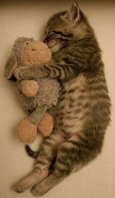Nap time :)
