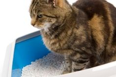 Go green with your cats! Check out the most ecofriendly cat litters here!
