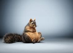 We think this CG Squirrel by 3D artist Lorett Foth is incredible. How about you?  #cgart