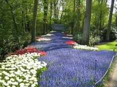 Keukenhoff Gardens in Netherlands