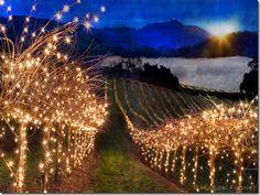Magical Vineyard
