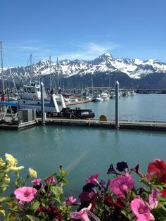 The boat harbor in Seward, Alaska... Just down the road is the Waterfront Park campground.  It's a lovely place to camp along the beach!<3