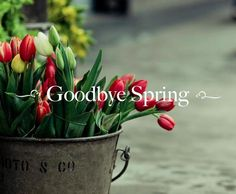 Goodbye Spring my Dear Friend. May I see you again.