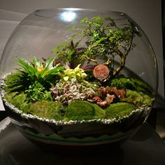 This terrarium is looks fantastic, but will be very difficult to maintain with so many varied cultural requirements in one planting.