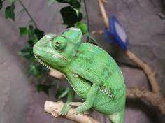 Resultado de imagen de reptiles
