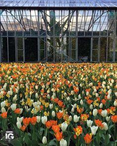 P H O T O |@claudiamiglia L O C A T I O N | I giardini botanici di Villa Taranto - Verbania F R O M | @igverbania L O C A L M A N A G E R | @maxboggian S E L E C T E D | maxboggian F E A U T U R E D T A G | #igverbania M A I L |igworldclub@gmail.com S O C I A L | Facebook  Twitter Snapchat M E M B E R S | @igworldclub_officialaccount @igworldclub_thematic C O U N T R Y R E Q U I R E D | If you want to join us and open an igworldclub account of your country or city please write us or go…
