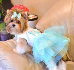 ¡Tiffany Sniffany regalo caja perro vestido con los Blings de Swarovski! Volantes de la blusa del satén de seda japonesa de lujo! ¡Todos los tamaños disponibles hasta 18 circunferencia y por encargo! Tenga en cuenta el tamaño de su cachorro en el check out. Pawsome y Pawbulous Day