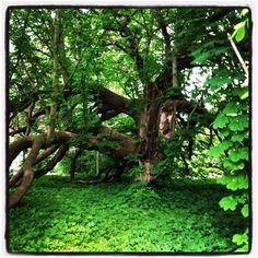 Old tree / Nina Ohlin