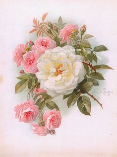 Print FREE SHIP Victorian Morning Roses Paul de Longpre Pink White Cabbage Roses