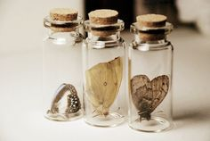 Set of three small butterfly and moth specimens in glass hars with corked lids. Butterflies were pre-softened and then pushed gently into the jars to avoid breakage. The Winners Curse, Calligraphy Alphabet, Mason Jar Wine Glass, Love Drawings, Curiosity, Moth, Bugs, Aesthetics, Witchcraft
