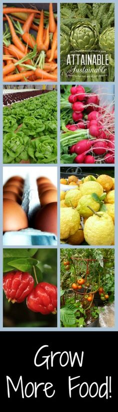 Number one in our plan to be more self-reliant? Grow more food in the garden!
