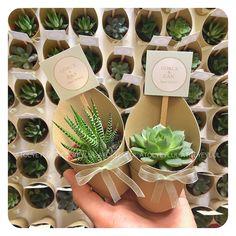 GökçeCan.. #sukulent #succulents #kaktus #cactus #succulove #nikahsekeri #babyshower #disbugdayi #love #birthdaygift #kurumsalhediye #weddingfavour #bride #gift #favors #hediyelik #weddinggift #nişanhatırası #nişanhediyesi #sözhatırası #sözhediyesi #düğünhediyesi #düğünhatırası #kırdüğünü Herb Wedding, Wedding Art, Wedding Gifts, Cactus Gifts, Succulent Gifts, Baby Shower Tea, Brewery Wedding, April Wedding, Flower Ball